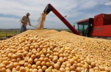 Oito dias de campo apresentam cultivares de soja convencional em Mato Grosso