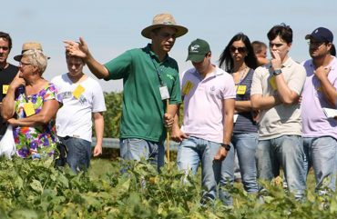 Dia de campo mostra integração lavoura-pecuária no norte de Mato Grosso