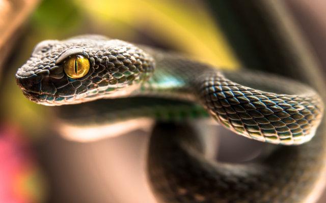 primeiros-socorros-picada-de-serpente