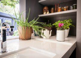 De Casa Para Casa – Plantas na Decoração de Casa