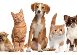 Mundo dos pets – Cuidados Necessários no Inverno