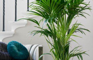 Como Decorar a Casa com Plantas e Flores