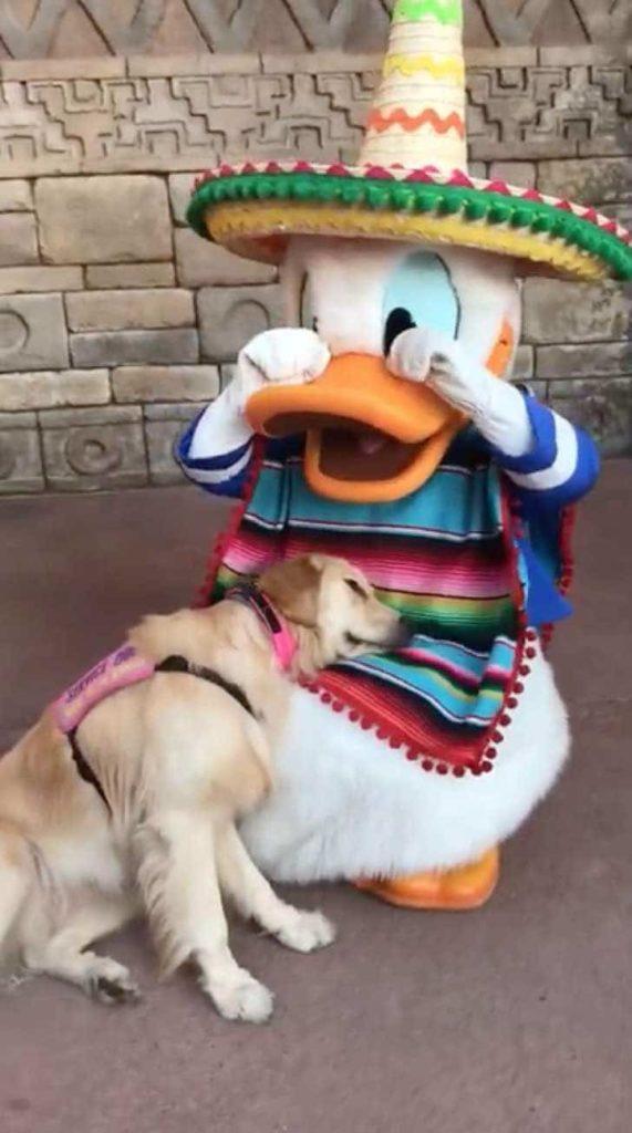 Cachorrinha emociona internautas ao conhecer o Pato Donald