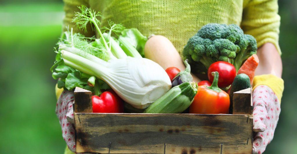 Novidade para fomentar economia local pode ajudar agricultores