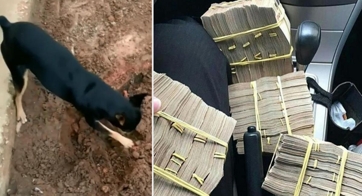 Pinscher encontra maços de dinheiro provenientes da vendas de drogas 2